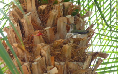 A Channeled Message: The Mighty Hummingbird's Family